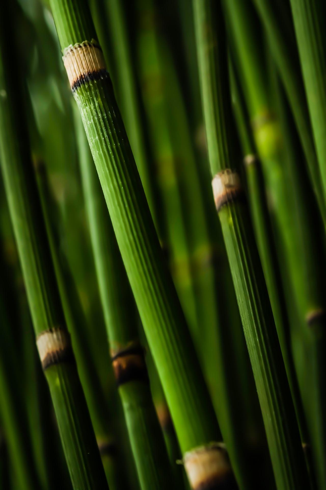 bamboo-984548_1920